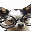 funny puppy pic Animals 176x220