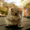 funny squirrel Picture Animals 320x480