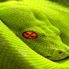 green snake Picture Animals 360x640