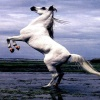 horse stand up Animals 320x480