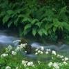 leaf scenery photo Nature 360x640