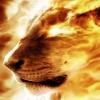lion fire Animals 240x320