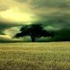 lone tree Nature 320x480