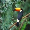 Long beak bird HD 400x300