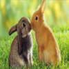 lovely Rabbit Animals 1920 x 12