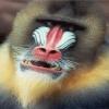 monkey pictures Animals 320x480