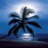 ocean tree Nature 176x220
