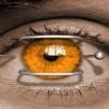orange eye Nature 176x220