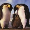 penguin couple love Animals 176x220