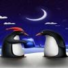penguin couple pics Animals 360x640