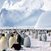 penguins pics Animals 176x220