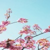 pink tree Nature 360x640