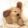puppy sleep Animals 176x220