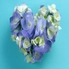 Purple White Petals heart Others 400x300