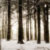 snow forest Picture Nature 360x640