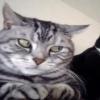 Super cat Animals 176x220