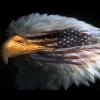 USA Eagle Others 320x480