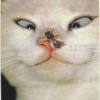 very funny cat Animals 176x220