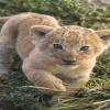 white lion cub Animals 360x640