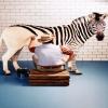 Zebra Designing Others 320x480
