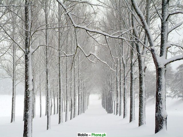 snow path wallpapers - photo #14