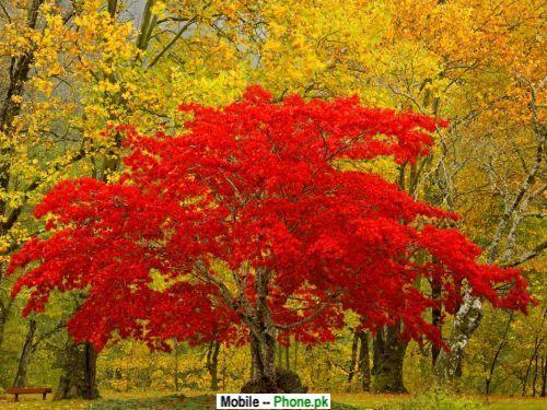 treasure_tree_nature_mobile_wallpaper.jpg