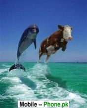Water horse jump Wallpapers Mobile Pics