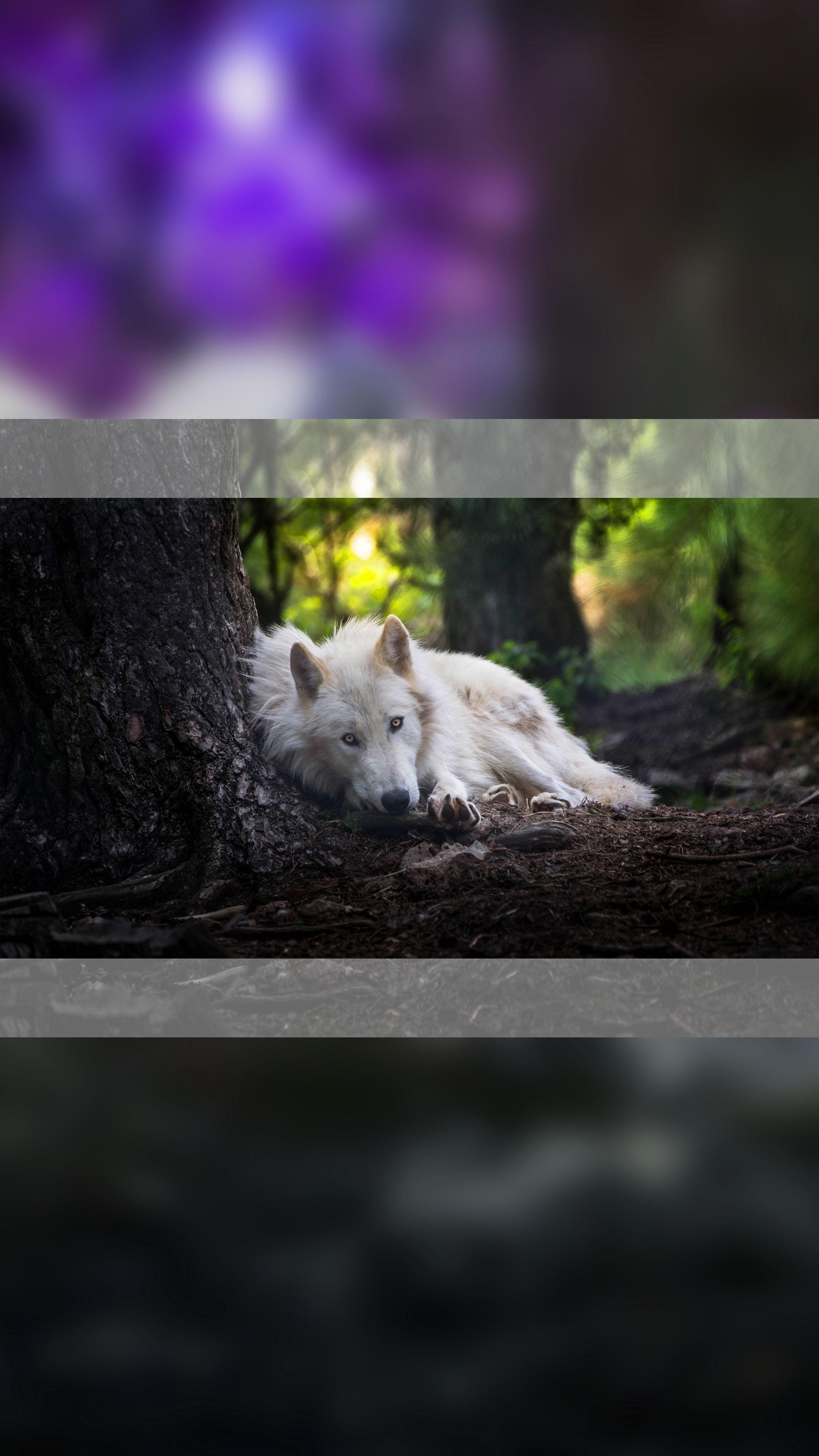 white_wolf_animals_mobile_wallpaper.jpg