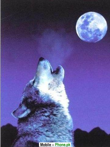 wolf_moon_animals_mobile_wallpaper.jpg